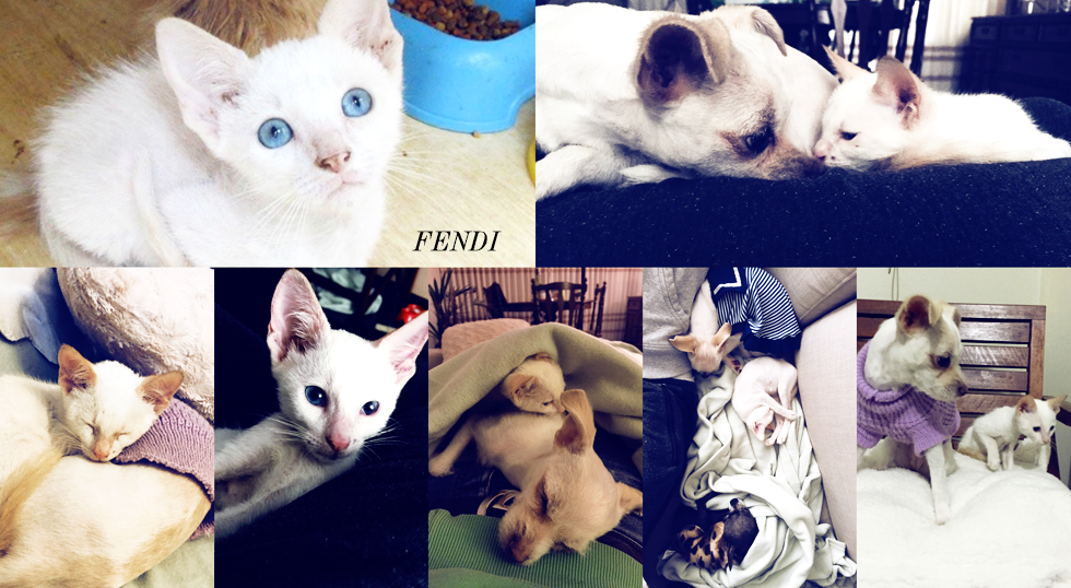 Fendi collage